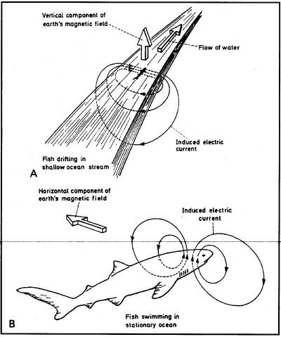 DARPA's shark experiments.
